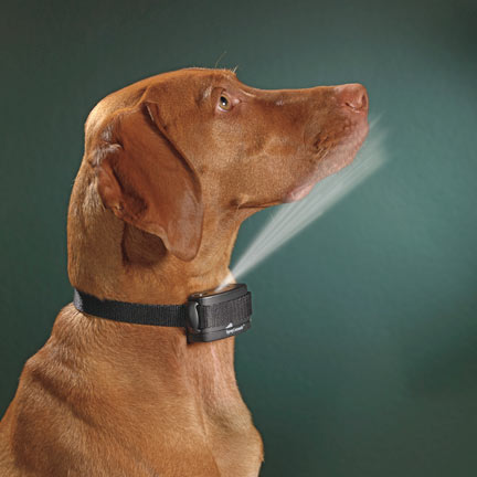 Anti Barking Devices For Small Dogs