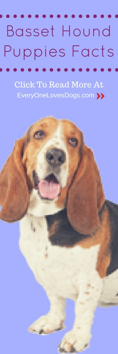 basset hound puppies facts