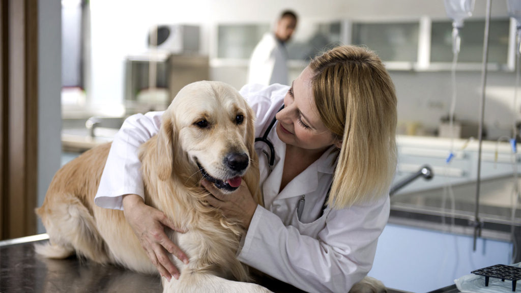 When to consult the vet