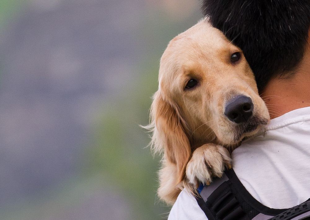 How Your Dog Expresses Feelings - Love