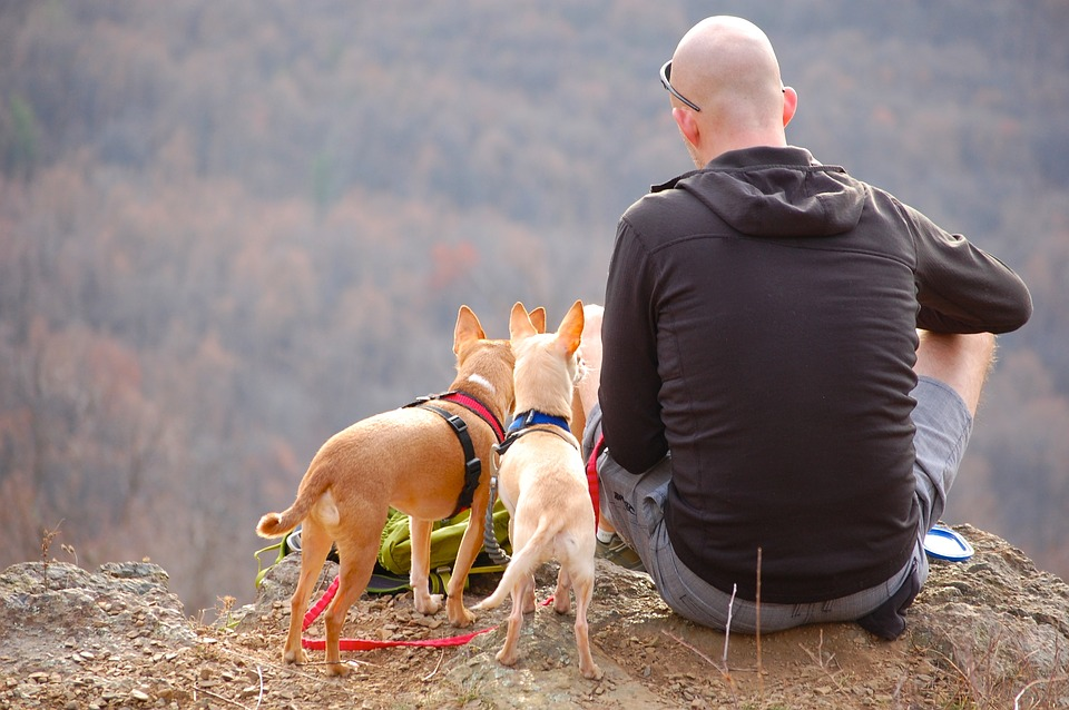 Tips To Travel With Your Dog Safely - Get Your Dog Used To Travelling
