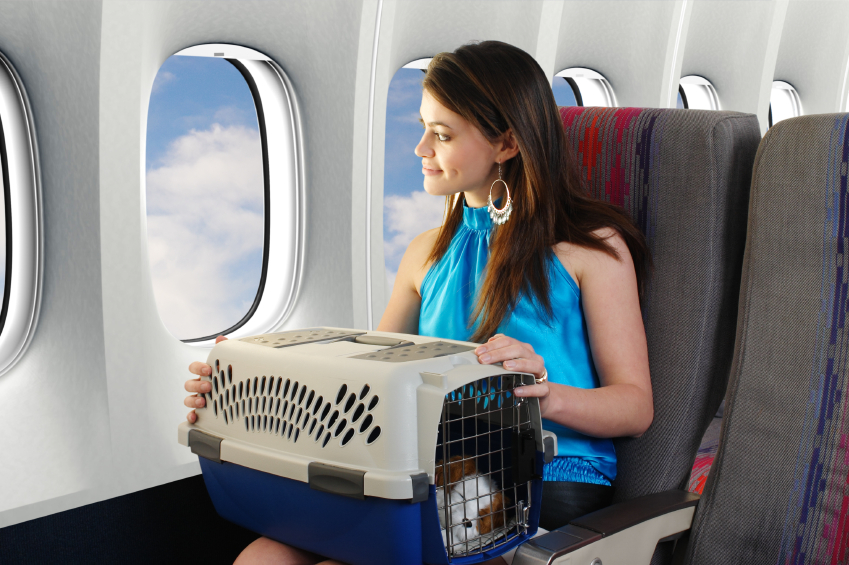 Tips To Travel With Your Dog Safely - Tips For Air Travel With Your Dog