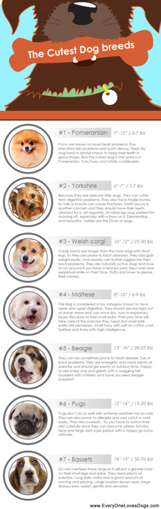 The Cutest Dog breeds2