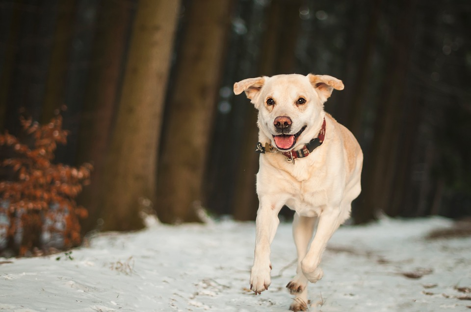 7 Tips On How to Take Care of Your Dog During Winter