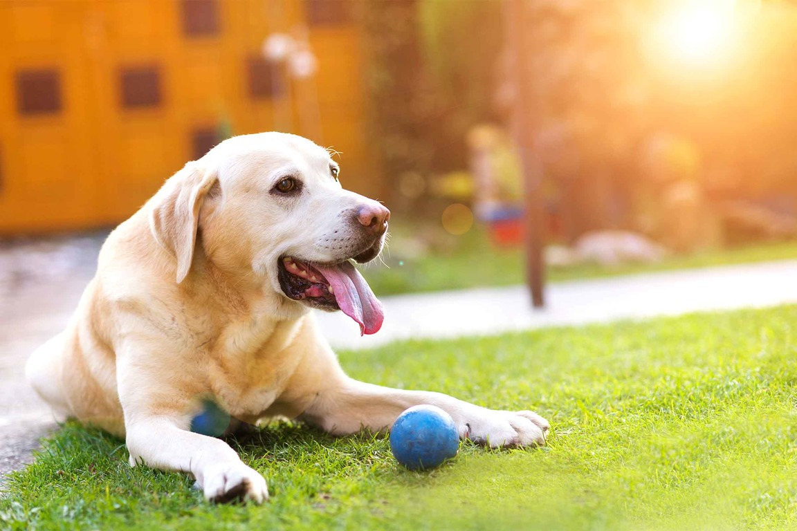 What is wheezing in dogs