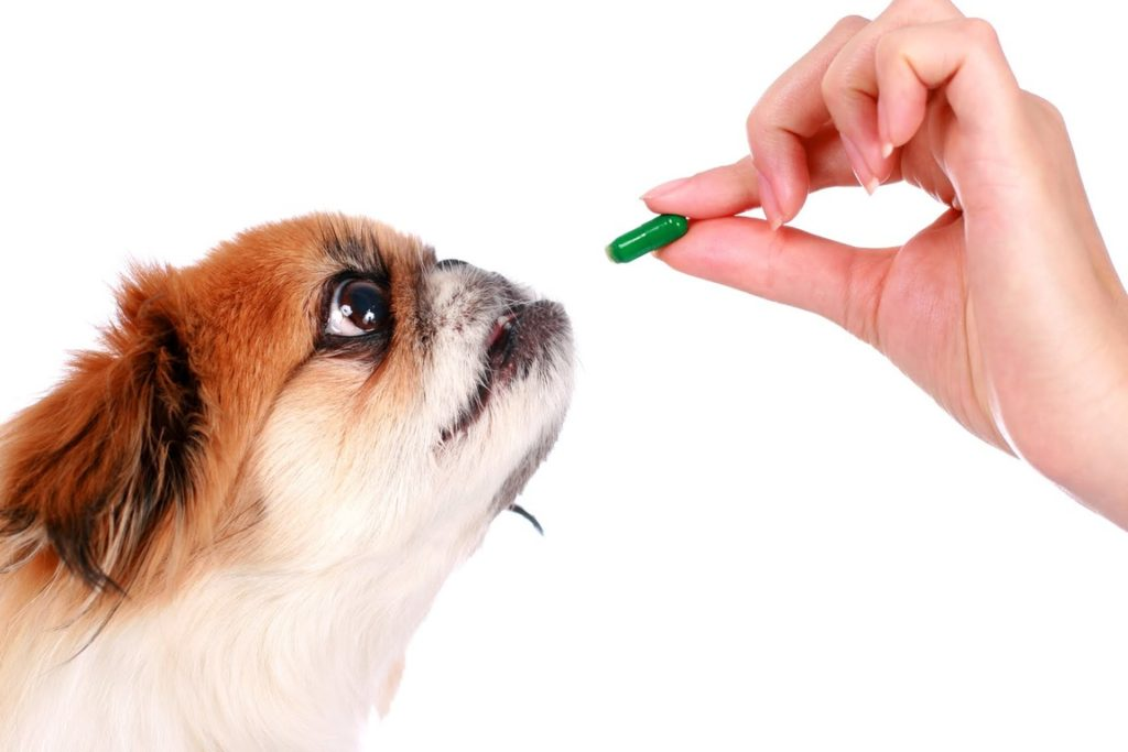 giving pill for dog