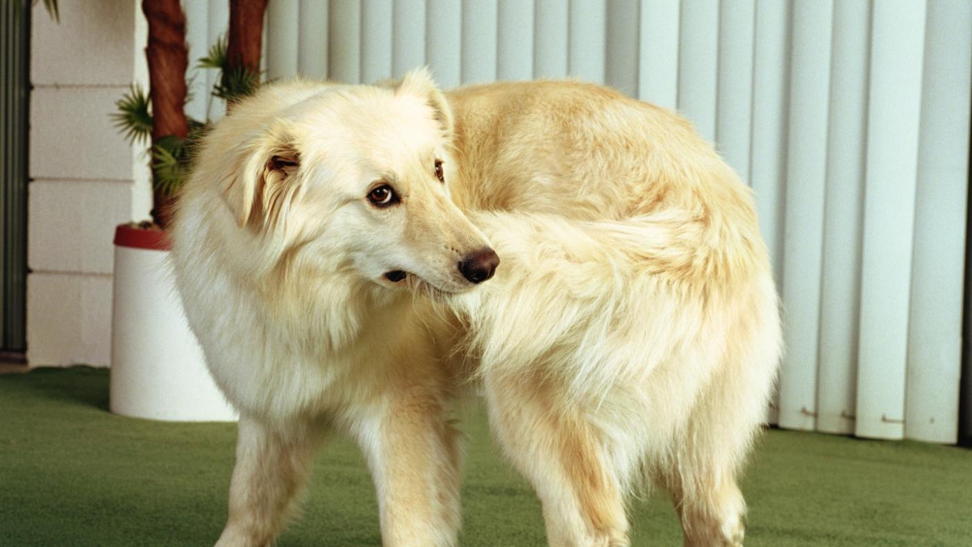 how to avoid yeast infection in dogs